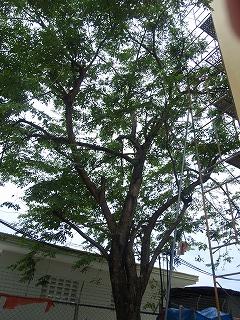 CAI_0240blog.jpg